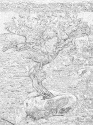 Tree250